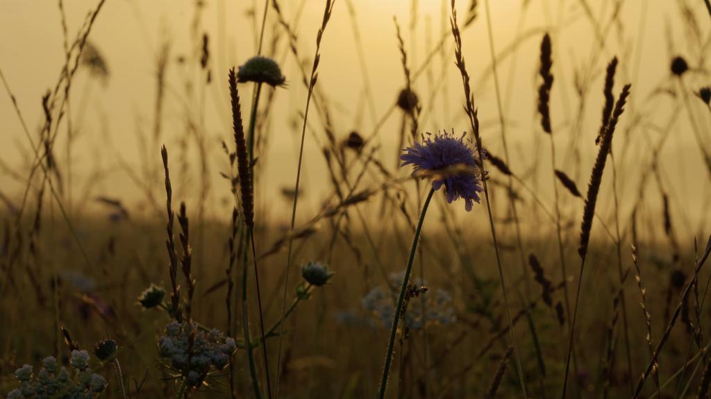 Heartwood Meadow, Owen Diplock